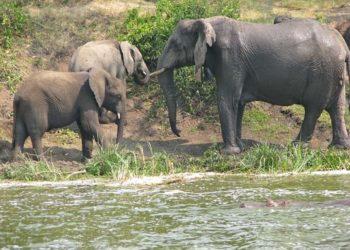 World Animal Protection Calls for International Ban on Wildlife Trade