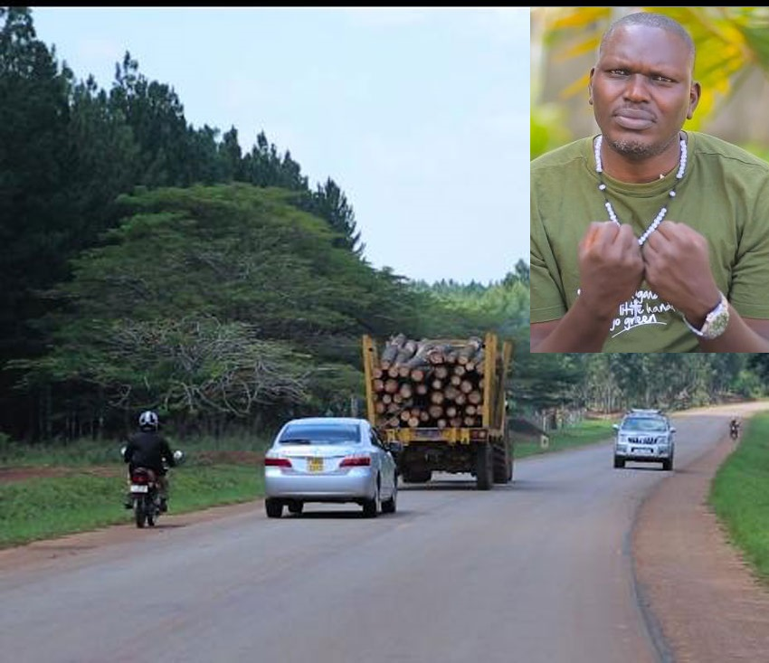 Tree logs being transported from Bugoma Forest. In preset is Environmentalist Joseph Masembe
