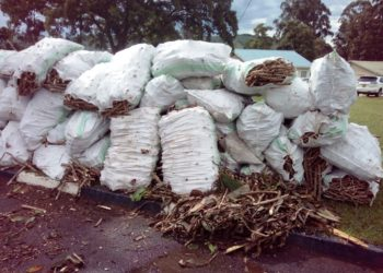 Cassava cuttings dumped at the district headquarters