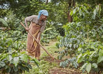 A coffee farmer in the Mt Elgon Region, Uganda